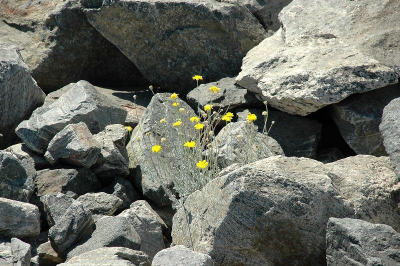 Flowers Rock!