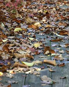 Leaves (36789516)