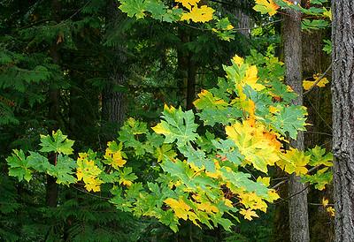 Fall Colors 4 (50775657)
