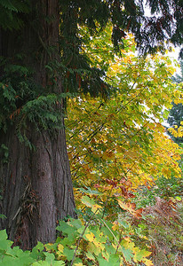 Fall Colors 1 (50775654)