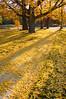Autumn in Forest Park<br /> St. Louis<br /> CCI