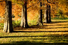 Autumn in Forest Park, St. Louis, Missouri <br /> 2007<br /> RL