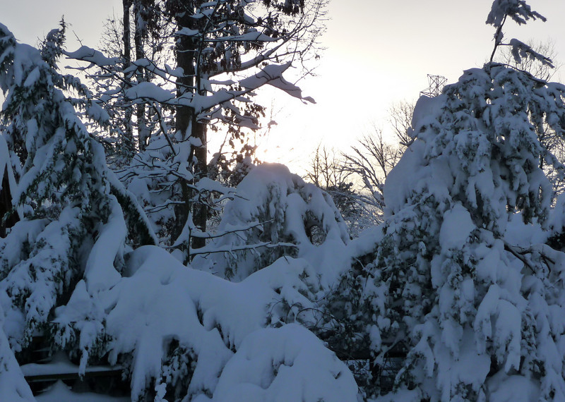 Trees in our backyard, as the sun peeks through on it's way to setting.
