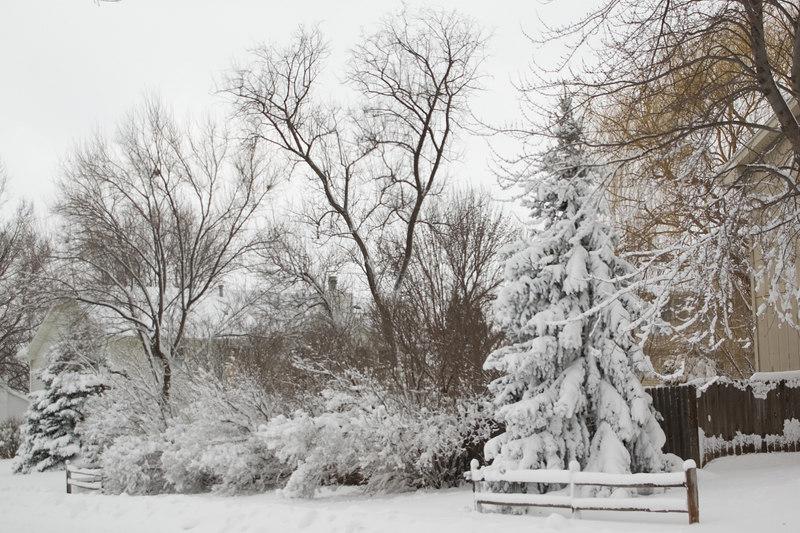 More snow laden trees.