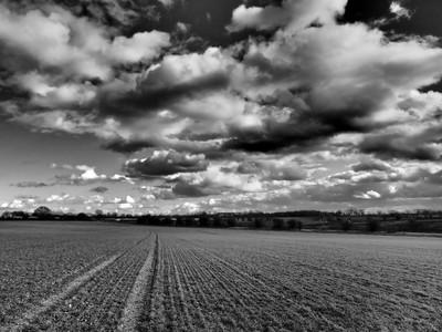 Rural landscape black and white
