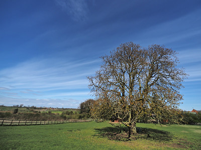 Cirrus clouds and tree