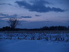 Twilight snow on Bauman Rd. near Steinsburg PA
