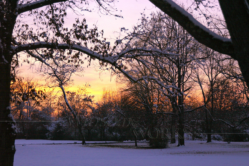 Trees in Snowy Sunset at Pearl Buck's Homestead