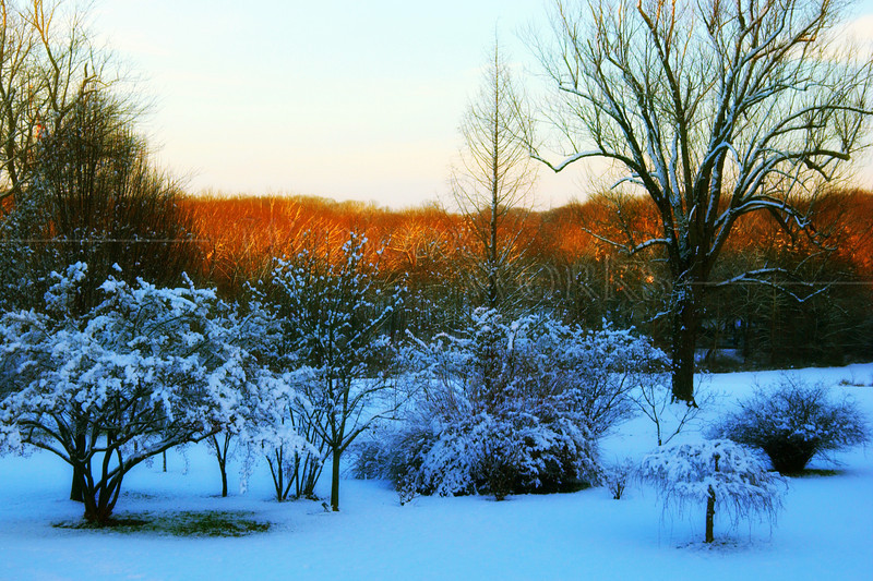 Snowy Trees in Twilight at Pearl Buck's Homestead