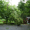 After - fallen branch
