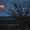 Moon 12-12-08 4:55 PM