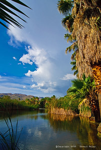 """Calm before the Storm"", Agua Caliente Park, Tucson, Az., 07/19/10"