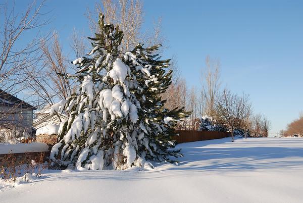 Colorado Blizzard 2006