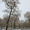 Dunham Trees