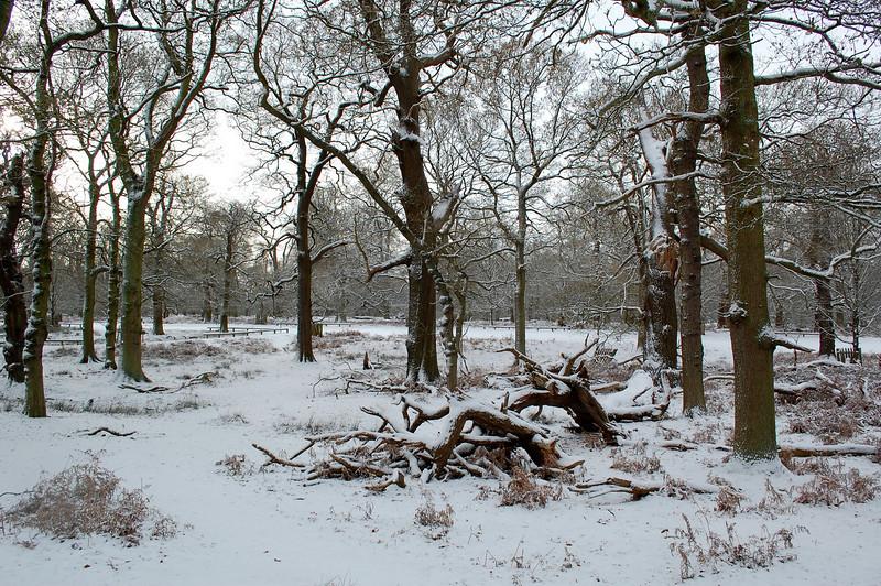Dunham Park in the Snow