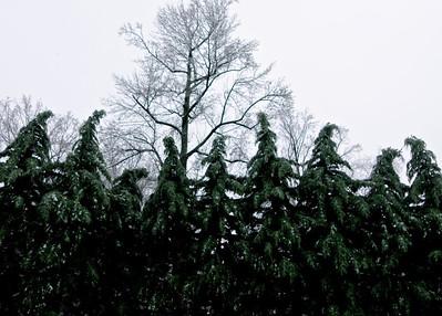 Distressed Cypress