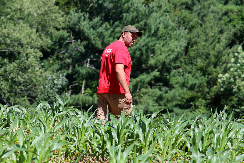 The warm and dry weather conditions are making it rough for farmers like Jim Lattanzi owner of Hollis Hills Farm in Fitchburg. Lattanzi looks over his Corn crop on Tuesday afternoon on his farm. SENTINEL & ENTERPRISE/JOHN LOVE