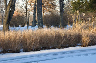 Afternoon light on the grasses