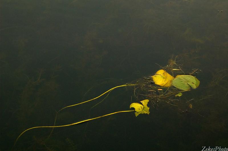 Foliage in the estuary.