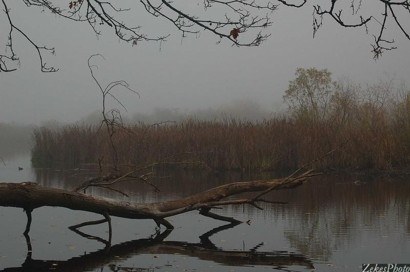 Estuary awakening in fog.
