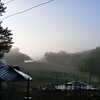 Fog Over the East Pasture