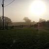 Fog Ringing in the Sun