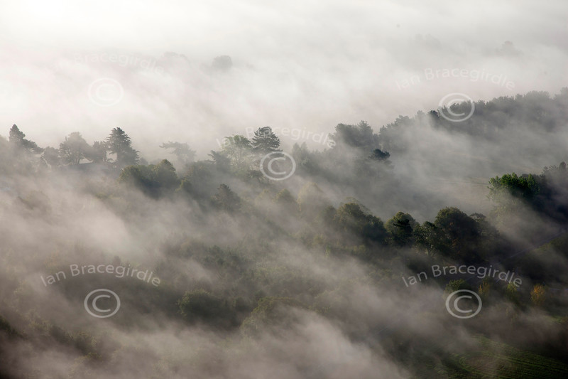 An aerial photo of trees in mist.