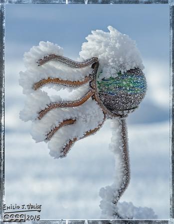 Frostiest