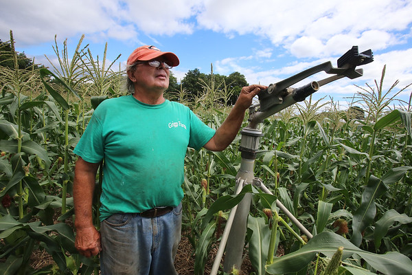 Griggs Farm Billerica drought 081716