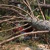 Patti's van undr tree