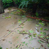 OK - good start after the wild night before....lots of shredded tree debris in the back garden but nothing major so far...