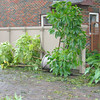 Our first expedition outside on Saturday afternoon - plants blown over in Driscoll St