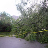 More downed trees
