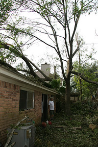 Clearing out neighbor's trees across the street from parents.