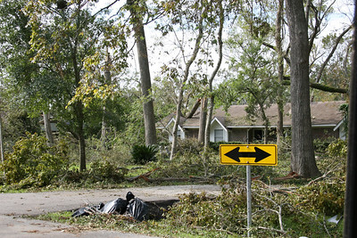 """This yard """"had"""" a lot of beautiful, mature trees.    Driving through the in-law's hood."""
