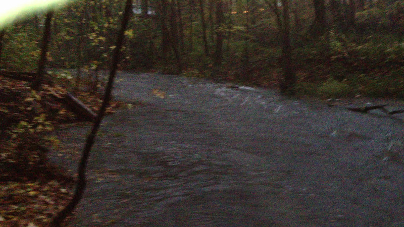 Little creek behind Mom's house in Bowie