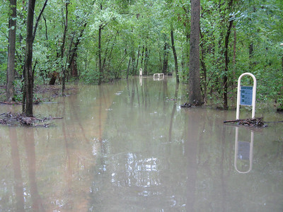 I was wearing my duck boots, so I walked into the flood water to see how far I could get before it got too deep. I was only able to go about 15 feet before it started coming up above the rubber part of my boots. Although the suede upper part is waterproofed, I didn't want to get it soaked in case the water is contaminated by the overflowing sewer. The rubber part can be easily washed off. 9-7-11