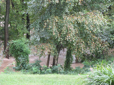 Just a few yards downstream, the Little Patuxent is quite a bit wider as it merges with the lake.   9-7-11
