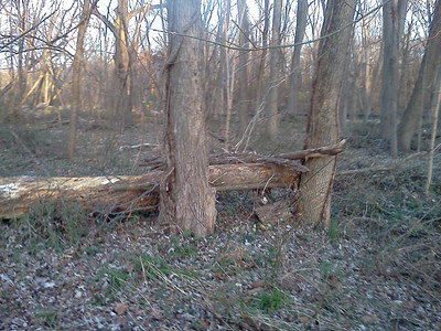 """Aftermath:  In the woods just above the north end of Lake Kittamaqundi, a large tree trunk was wedged against two other trees by the floodwaters.   On Page 4 of this gallery there are views of this area during the flood (the ones captioned """"downstream"""").  11-28-11"""