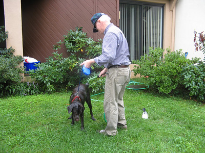 This young chocolate lab was gamboling in the water right near the overflowing sewer manhole, so he's being hosed off thoroughly in case the flood water is contaminated. But the dog isn't too happy with this procedure!  9-7-11