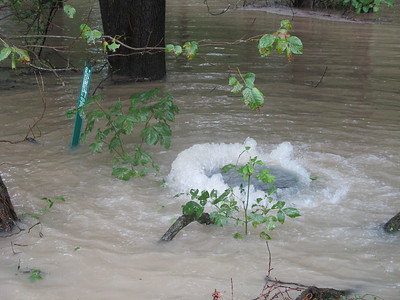 I fear there may be raw sewage in the water -- the flow coming out of the sewer is strong enough to push the heavy manhole cover up. If it's coming out of this manhole, the others along this sewer line must be backing up too.  9-7-11