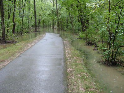 Uh-oh. It looks like the path leading south toward the lake is completely flooded, even though this point is still nowhere near the lake shore.  9-7-11