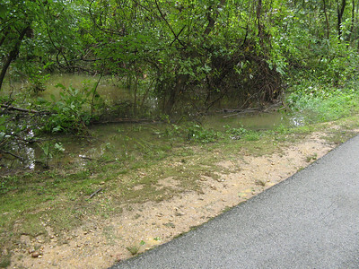 The woods along the stream that runs between Wilde Lake and Lake Kittamaqundi. Like the meadow at the north end of Lake Kittamaqundi these woods are a floodplain -- and it certainly is flooded today.   9-7-11