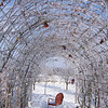 Picking icicles on the grape arbor<br /> It is still cool under the Grape Arbor.