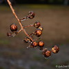 January 15, 2013<br /> <br /> Frozen buds