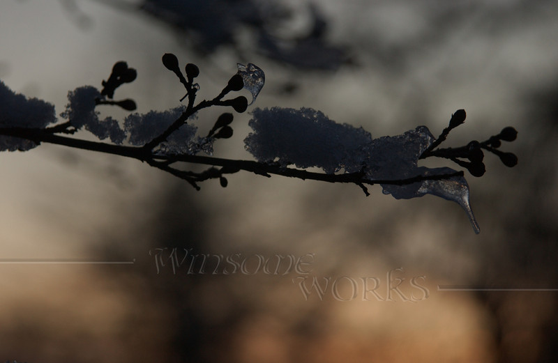 Icy branch at Pearl Buck's homestead - Dublin, PA