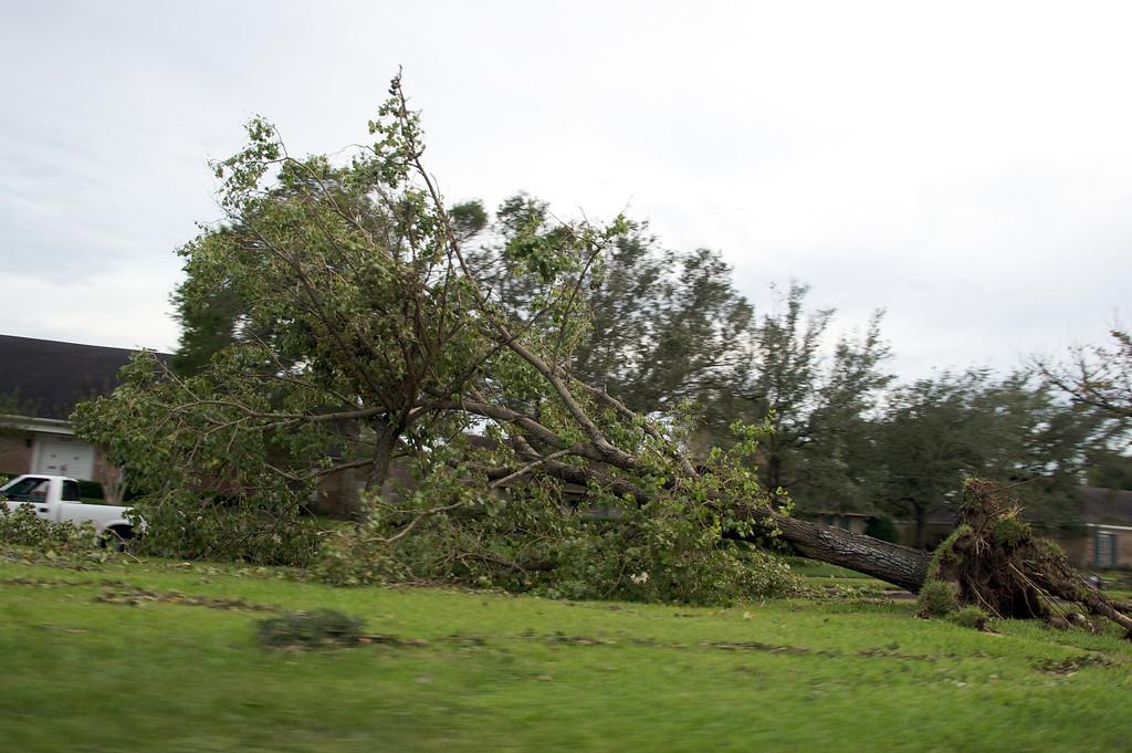 Large trees weren't safe!