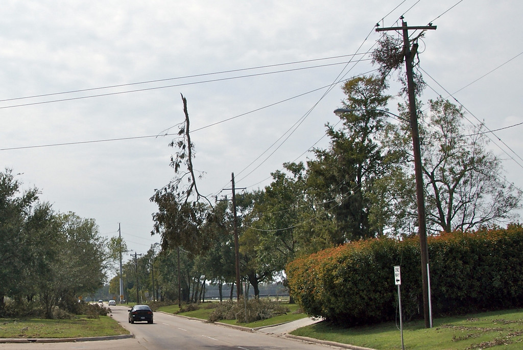 Tree branch hung near HEB on S. Braeswood for 7 days