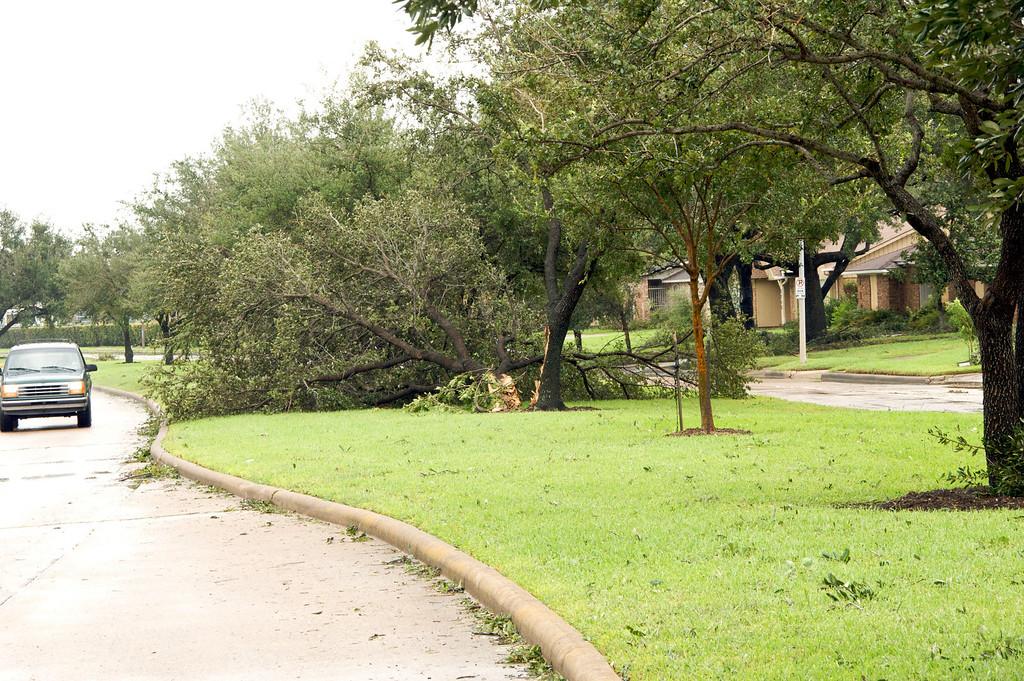 Broken trees everywhere . . .