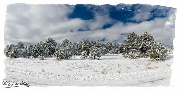 January 2016 Snow